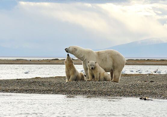 Arctic Ocean Access at Barrow