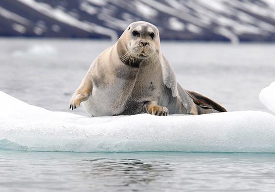Wildlife Viewing at Alaska